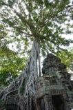 Ta Prohm, część Khmer świątynny kompleks, Azja cambodia przeprowadzać żniwa siem Antyczna Khmer architektura w dżungli obrazy stock