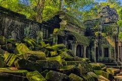 Ta Prohm, część Khmer świątynny kompleks, Azja Siem Przeprowadza żniwa, Cambodi Obraz Stock