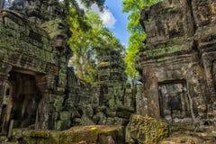 Ta Prohm, część Khmer świątynny kompleks, Azja Siem Przeprowadza żniwa, Cambodi Fotografia Royalty Free