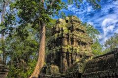 Ta Prohm, część Khmer świątynny kompleks, Azja Siem Przeprowadza żniwa, Cambodi Obraz Royalty Free