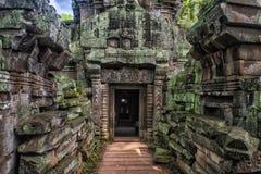 Ta Prohm, część Khmer świątynny kompleks, Azja Siem Przeprowadza żniwa, Cambodi Obrazy Stock