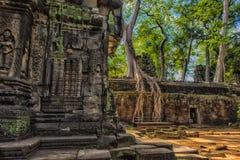 Ta Prohm, część Khmer świątynny kompleks, Azja Siem Przeprowadza żniwa, Cambodi Zdjęcia Royalty Free