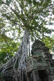 Ta Prohm, del av en khmertempelkomplexet, Asien cambodia skördar siem Forntida en khmerarkitektur i djungel arkivbilder