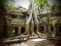 Ta Prohm Giant Tree Root Stock Photo