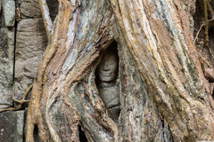Ta Prohm Hidden Face insde tree Royalty Free Stock Images