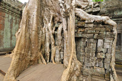 Ta Prohm Stock Photos