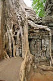 Ta Prohm Stock Photography