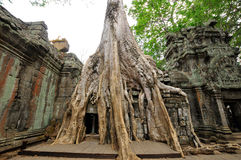 Ta Prohm Stock Images