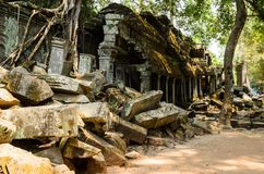 Ta Prohm. Part of Khmer Angkor temple complex, popular among tourists ancient landmark and place of worship in Southeast Asia. Siem Reap, Cambodia Royalty Free Stock Photo
