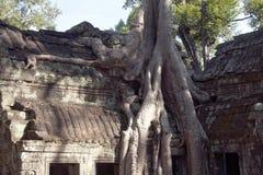 TA Prohm que un tejado del siglo XII del templo en el estilo de Banyon embalado en el árbol de Spung arraiga Imágenes de archivo libres de regalías