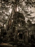 Ta Prohm (Rajavihara) in Angkor, Siem Reap, Cambodia. Stock Photography