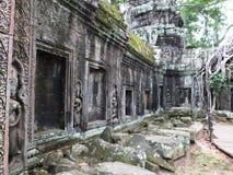 Ta Prohm (Rajavihara), en tempel på Angkor, landskap, Cambodja Royaltyfria Bilder