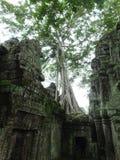 Ta Prohm (Rajavihara), en tempel på Angkor, landskap, Cambodja Royaltyfri Bild