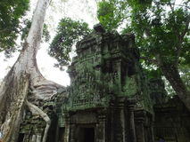 Ta Prohm (Rajavihara), en tempel på Angkor, landskap, Cambodja Fotografering för Bildbyråer