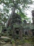 Ta Prohm (Rajavihara), en tempel på Angkor, landskap, Cambodja Royaltyfria Foton