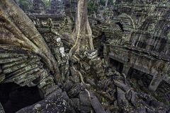 Ta Prohm rooftop view. View of overgrown temple ruins from the roof stock photography