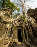 Ta Prohm roots gate. Impresive perspective Royalty Free Stock Image