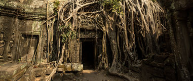 Ta Prohm roots gate panoramic. Ta Prohm cinematic perspective of temple Royalty Free Stock Photo