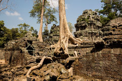 Ta Prohm roots and ruins. Ta Prohm roots breaking walls Royalty Free Stock Photos
