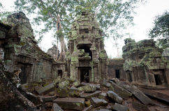 Ta Prohm Ruins Stock Images