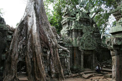 Ta prohm ruins Royalty Free Stock Image