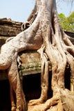 Ta prohm ruins, Angkor Wat, Cambodia Royalty Free Stock Photo