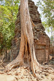 Ta prohm ruins, Angkor Wat, Cambodia Stock Images