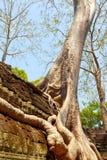 Ta prohm ruins, Angkor Wat, Cambodia Royalty Free Stock Image