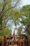 Ta prohm ruins, Angkor Wat, Cambodia. Ta Prohm temple covered in tree roots, Angkor Wat, Cambodia Stock Photo