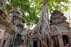 Ta prohm ruins, Angkor Wat, Cambodia. Ta prohm temple covered in tree roots, Angkor Wat, Cambodia Stock Image