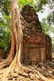 Ta prohm ruins, Angkor Wat, Cambodia. Ta prohm temple covered in tree roots, Angkor Wat, Cambodia Royalty Free Stock Photos