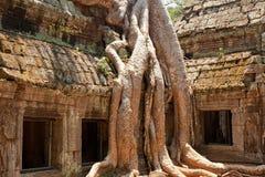 Ta prohm ruins, Angkor Wat, Cambodia. Ta Prohm temple covered in tree roots, Angkor Wat, Cambodia. Horizontal shot, close up Royalty Free Stock Photography