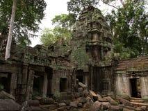 Ta Prohm, Siem oogst Royalty-vrije Stock Afbeelding