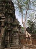 Ta Prohm, Siem oogst Royalty-vrije Stock Fotografie