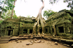 Ta Prohm, Siem Reap imagem de stock royalty free