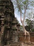 Ta Prohm, Siem Reap Royalty Free Stock Photography