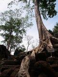 Ta Prohm, Siem Reap. Scenic view of Ta Prohm temple, Siem Reap, Cambodia Stock Photo