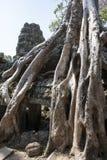 TA Prohm. Siem Reap. Camboya Fotografía de archivo libre de regalías