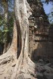 TA Prohm. Siem Reap. Camboya Fotos de archivo libres de regalías