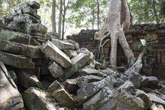 TA Prohm. Siem Reap. Camboya Foto de archivo