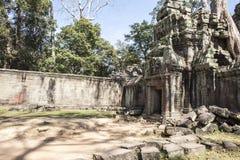 TA Prohm. Siem Reap. Camboya fotos de archivo