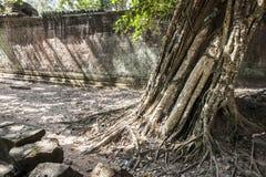 TA Prohm. Siem Reap. Camboya imagenes de archivo