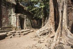 TA Prohm. Siem Reap. Camboya imagen de archivo libre de regalías