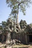 TA Prohm. Siem Reap. Camboya Imagen de archivo