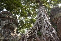 TA Prohm. Siem Reap. Camboya Foto de archivo libre de regalías