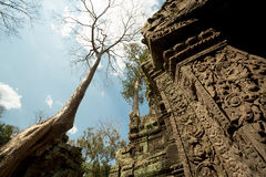 Ta Prohm. Sky view with representative elements of the temple (trees and carvings Stock Images