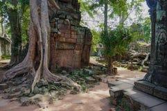 Ta Prohm, Teil des Khmertempelkomplexes, Asien Stadtzentrum von Siem Reap, Kambodscha Alte Khmerarchitektur im Dschungel Stockfotografie