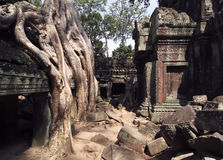 Ta Prohm Tempel Stockfoto