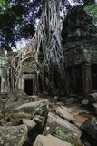 Ta Prohm temple. The ruins of Ta Prohm temple in Siem Reap Royalty Free Stock Photography