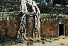 Ta Prohm temple. The ruins of Ta Prohm temple in Siem Reap royalty free stock photos